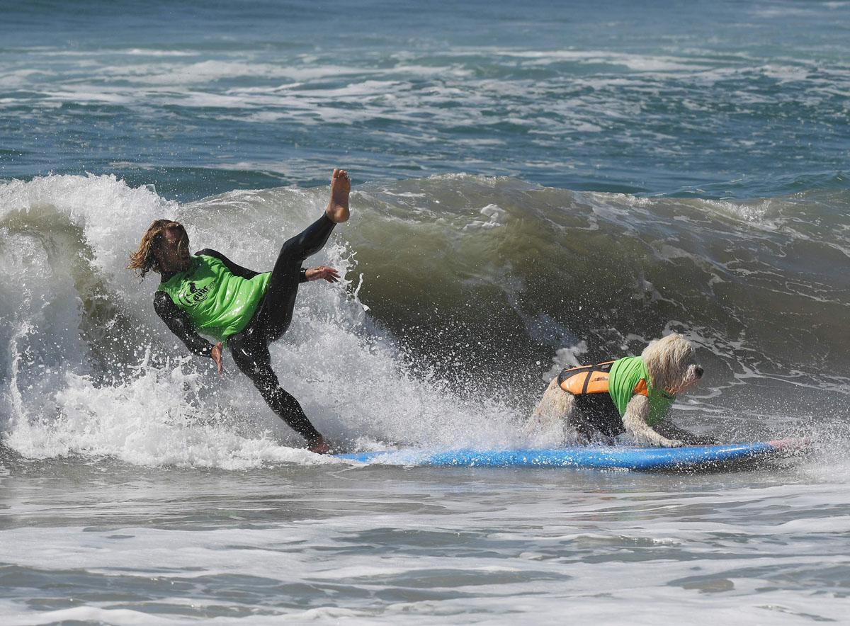 http://darkroom-cdn.s3.amazonaws.com/2016/09/AFP-Getty_US-LIFESTYLE-SPORT-ANIMAL-DOG-SURF-2.jpg