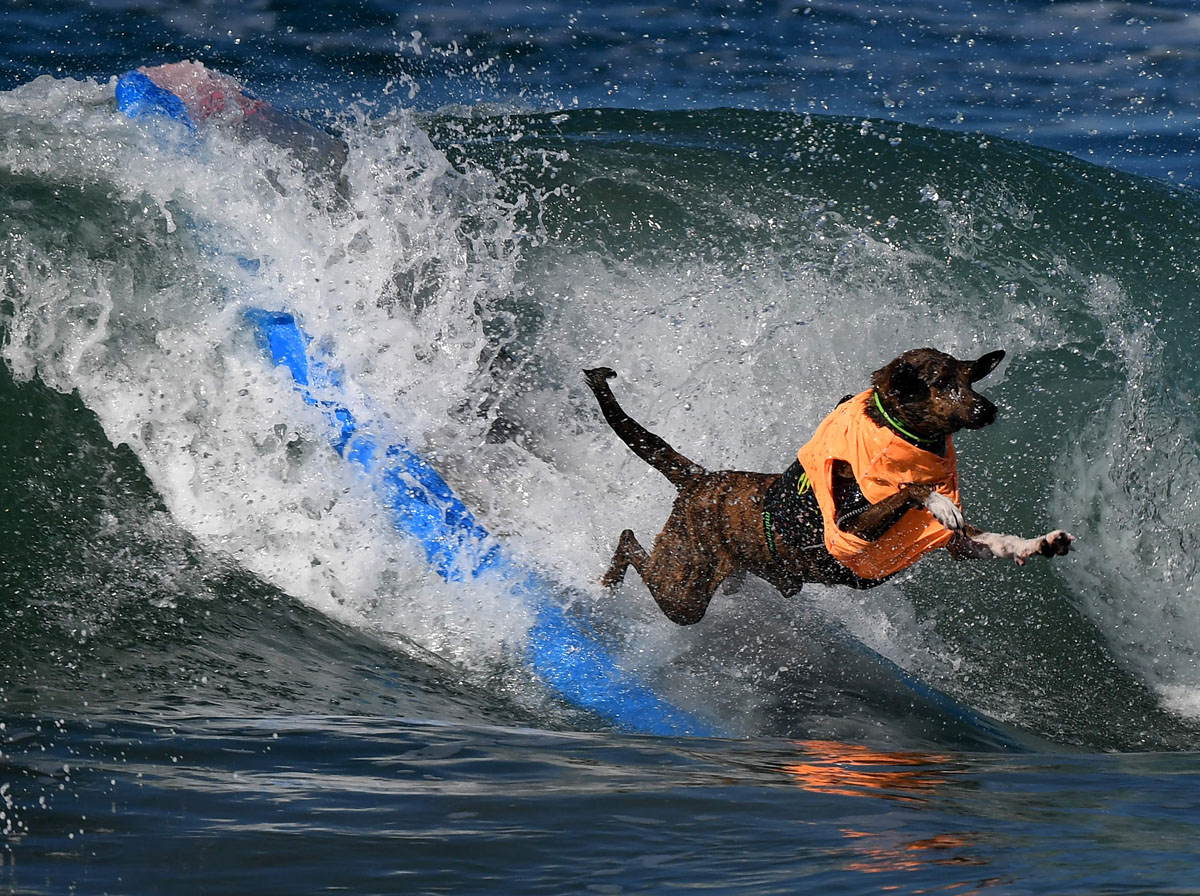 surf doggie surf