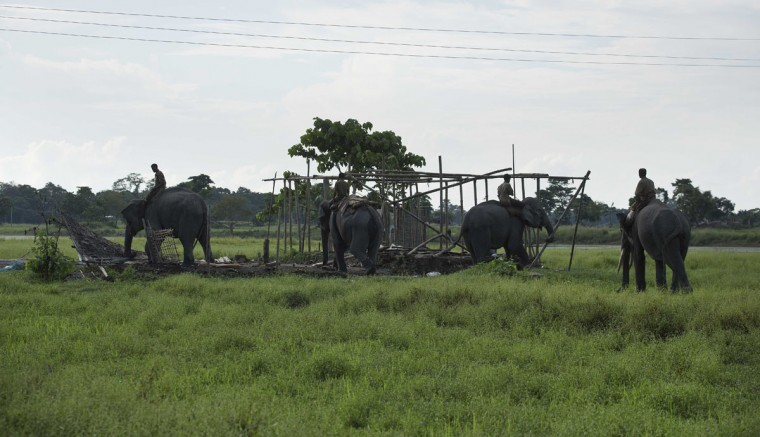 Mahouts guide forest department elephants to demolish houses at Bandardubi village, on the periphery of the Kaziranga National Park, northeastern Assam state, India, Monday, Sept. 19, 2016. Authorities ordered the demolition of around 300 houses in three villages to evict people living on the periphery of the rhino sanctuary to stop rampant poaching of the rare animal, a top police official said. Two people were killed and several others were injured Monday when villagers clashed with police while protesting the demolition of their homes. (AP Photo/Anupam Nath)