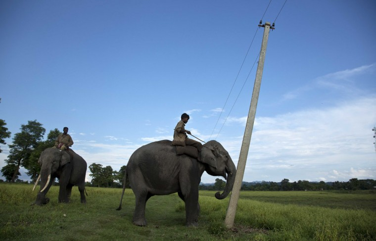 A mahout guides a forest department elephant to demolish power cable poles at Bandardubi village, on the periphery of the Kaziranga National Park, northeastern Assam state, India, Monday, Sept. 19, 2016. Authorities ordered the demolition of around 300 houses in three villages to evict people living on the periphery of the rhino sanctuary to stop rampant poaching of the rare animal, a top police official said. Two people were killed and several others were injured Monday when villagers clashed with police while protesting the demolition of their homes. (AP Photo/Anupam Nath)