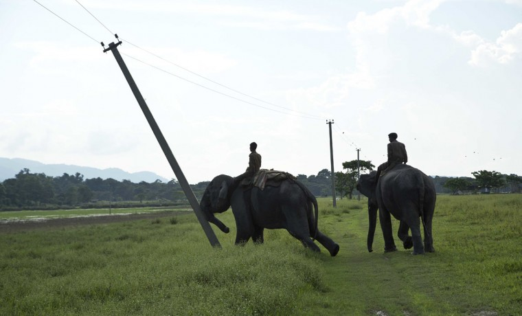 A mahout guides a forest department elephant to demolish power cable poles on the periphery of the Kaziranga National Park, northeastern Assam state, India, Monday, Sept. 19, 2016. Authorities ordered the demolition of around 300 houses in three villages to evict people living on the periphery of the rhino sanctuary to stop rampant poaching of the rare animal, a top police official said. Two people were killed and several others were injured Monday when villagers clashed with police while protesting the demolition of their homes. (AP Photo/Anupam Nath)