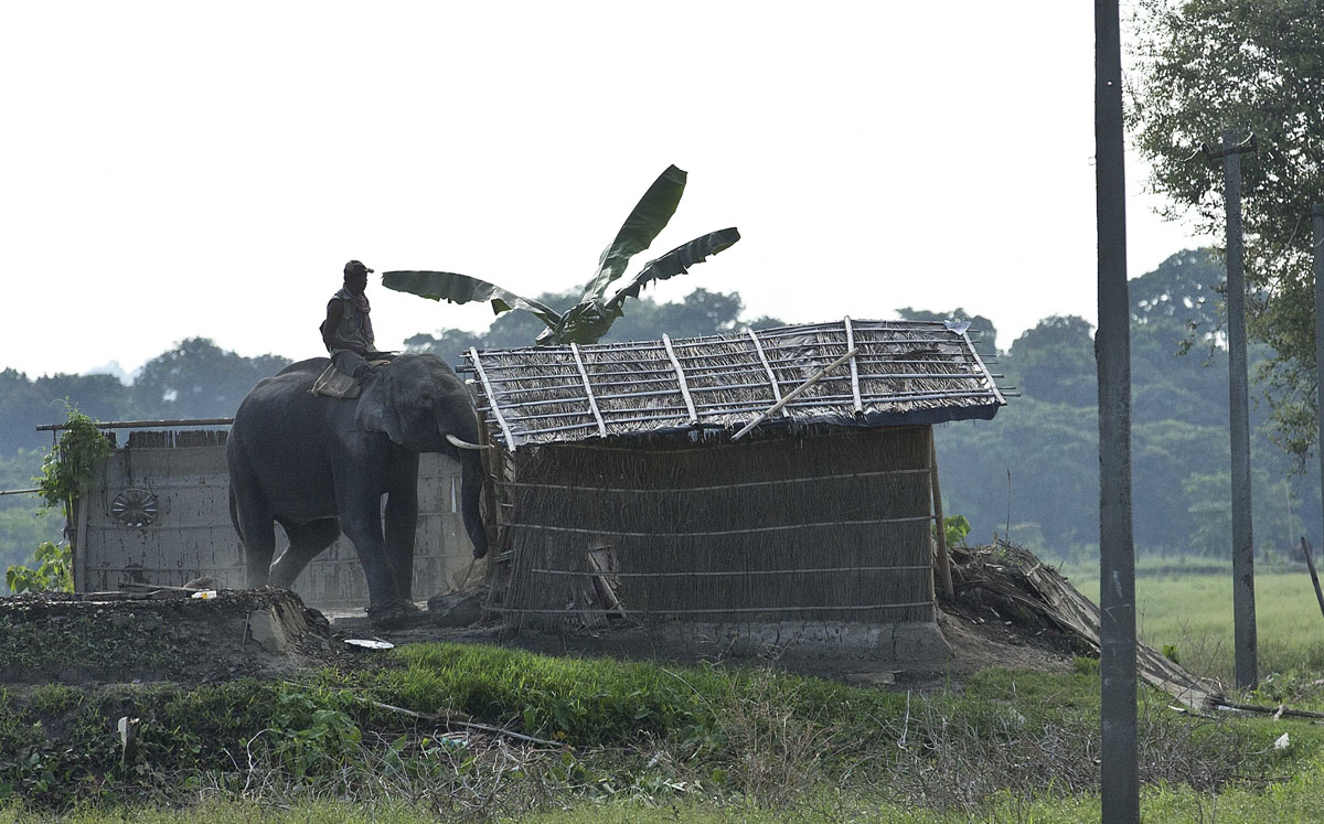 To stop rhino poaching, houses in Indian villages demolished