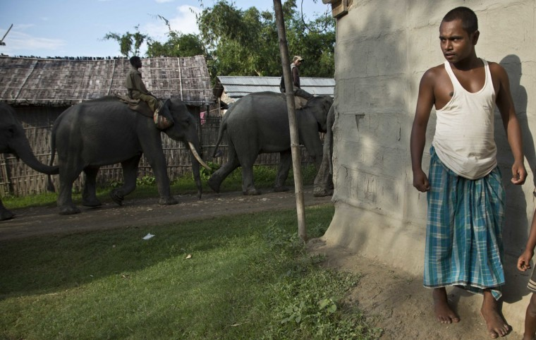 A man watches as mahouts guide forest department elephants to demolish houses at Bandardubi village, on the periphery of the Kaziranga National Park, northeastern Assam state, India, Monday, Sept. 19, 2016. Authorities ordered the demolition of around 300 houses in three villages to evict people living on the periphery of the rhino sanctuary to stop rampant poaching of the rare animal, a top police official said. Two people were killed and several others were injured Monday when villagers clashed with police while protesting the demolition of their homes. (AP Photo/Anupam Nath)