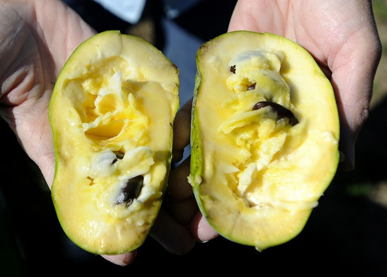 Inside of a pawpaw. (Dave Munch, Carroll County Times)