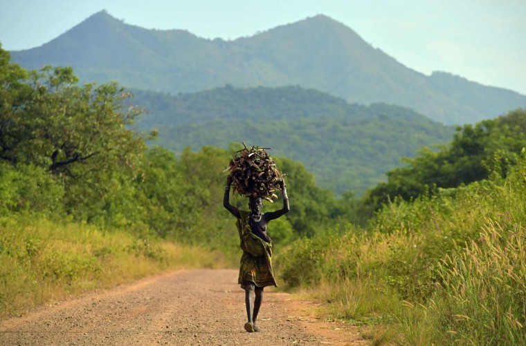 """A woman from the Suri tribe carries firewood on her head in Ethiopia's southern Omo Valley region, near Kibbish, on September 25, 2016. The Suri are a pastoralist Nilotic ethnic group in Ethiopia. The construction of the Gibe III dam, the third largest hydroelectric plant in Africa, and large areas of very """"thirsty"""" cotton and sugar plantations and factories along the Omo river are impacting heavily on the lives of tribes living in the Omo Valley who depend on the river for their survival and way of life. Human rights groups fear for the future of the tribes if they are forced to scatter, give up traditional ways through loss of land or ability to keep cattle as globalisation and development increases. (AFP PHOTO / CARL DE SOUZA)"""