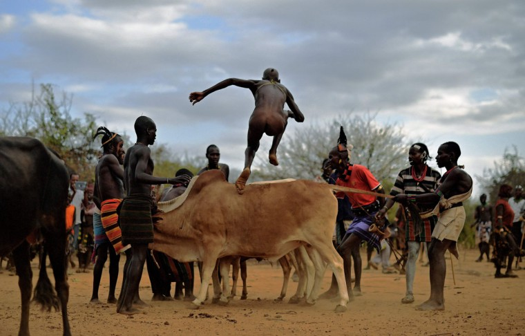 """A man from the Hamar tribe takes part in a bull jumping ceremony in Ethiopia's southern Omo Valley region near Turmi on September 19, 2016. The Hamar are a Nilotic ethnic group in Ethiopia. Bull jumping has been practised by the Hamars for thousands of years. The ceremony is a coming of age tradition which allows young men to marry. The man has to run across the backs of bulls which have been lined up, 4 times. If he falls through the row of bulls he is to start again until he finishes without falling. If the man fails to properly """"jump the bulls"""" he risks humiliation and being cast out by his village as well as never being able to marry in the future. Before the ceremony women line up to be whipped by men holding sticks to prove their devotion to the men. The construction of the Gibe III dam, the third largest hydroelectric plant in Africa, and large areas of very """"thirsty"""" cotton and sugar plantations and factories along the Omo river are impacting heavily on the lives of tribes living in the Omo Valley who depend on the river for their survival and way of life. Human rights groups fear for the future of the tribes if they are forced to scatter, give up traditional ways through loss of land or ability to keep cattle as globalisation and development increases. (AFP PHOTO / CARL DE SOUZA)"""
