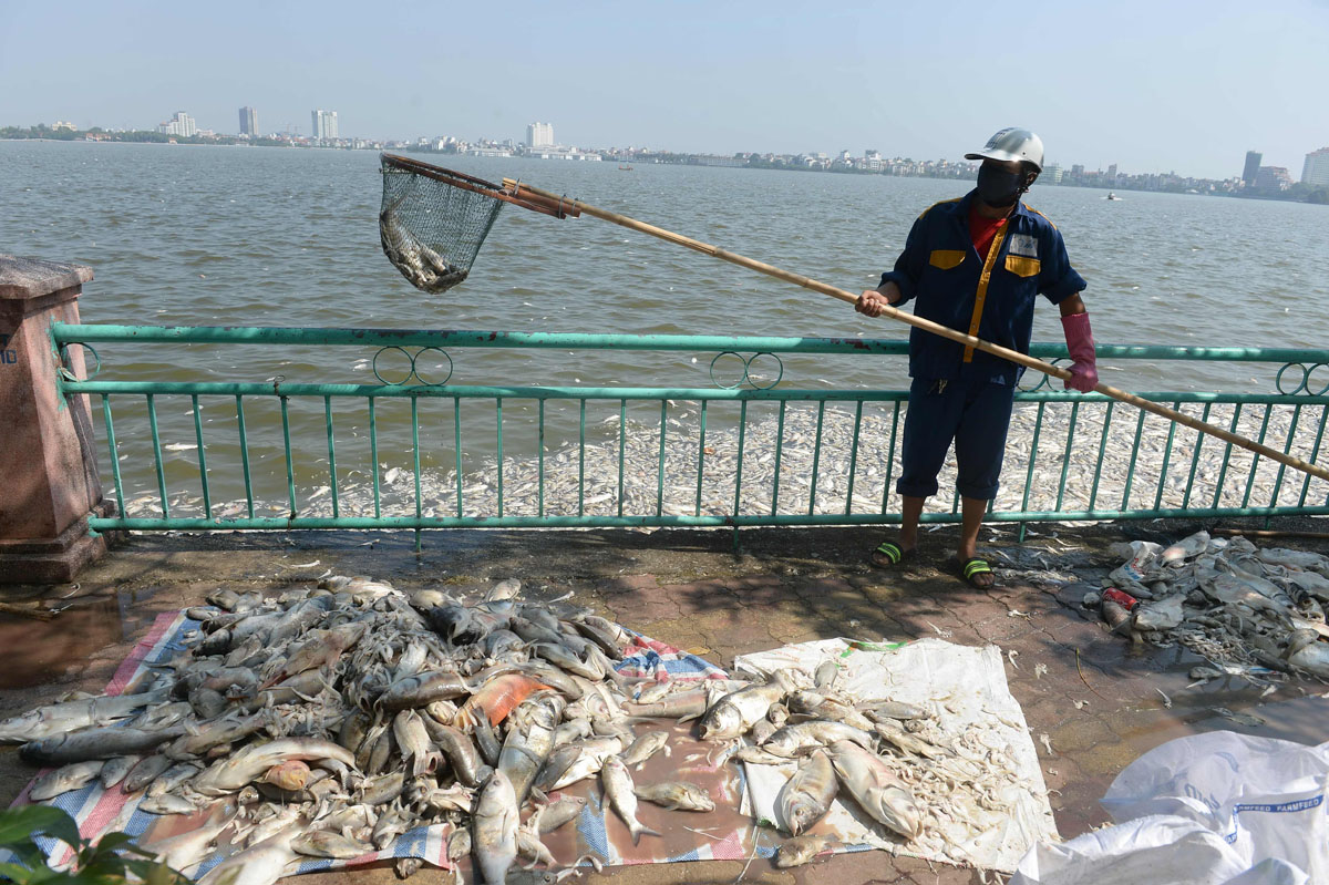Fish death at Hanoi's largest lake