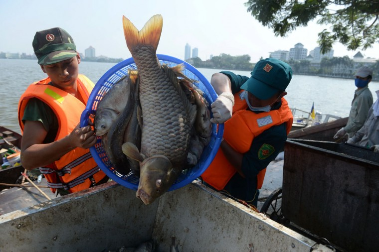 Soldiers pour down dead fish into a trash cart at Ho Tay lake (West Lake), Hanoi's largest lake, on October 3, 2016. (HOANG DINH NAM/AFP/Getty Images)