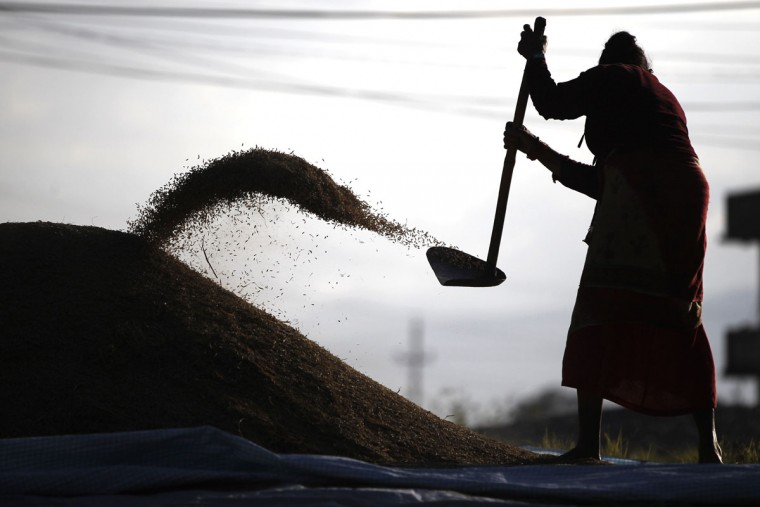 A Nepalese farmer separates grain from chaff after a harvest in Chunnikhel, on the outskirts of Kathmandu, Nepal, Thursday, Oct. 20, 2016. Agriculture is the main source of food, income, and employment for the majority of people in Nepal. (AP Photo/Niranjan Shrestha)