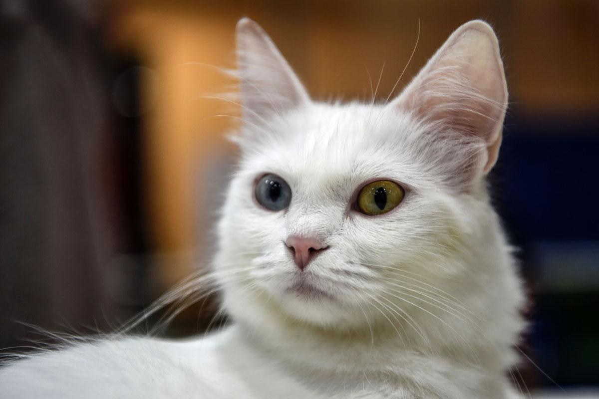 introducing new cat