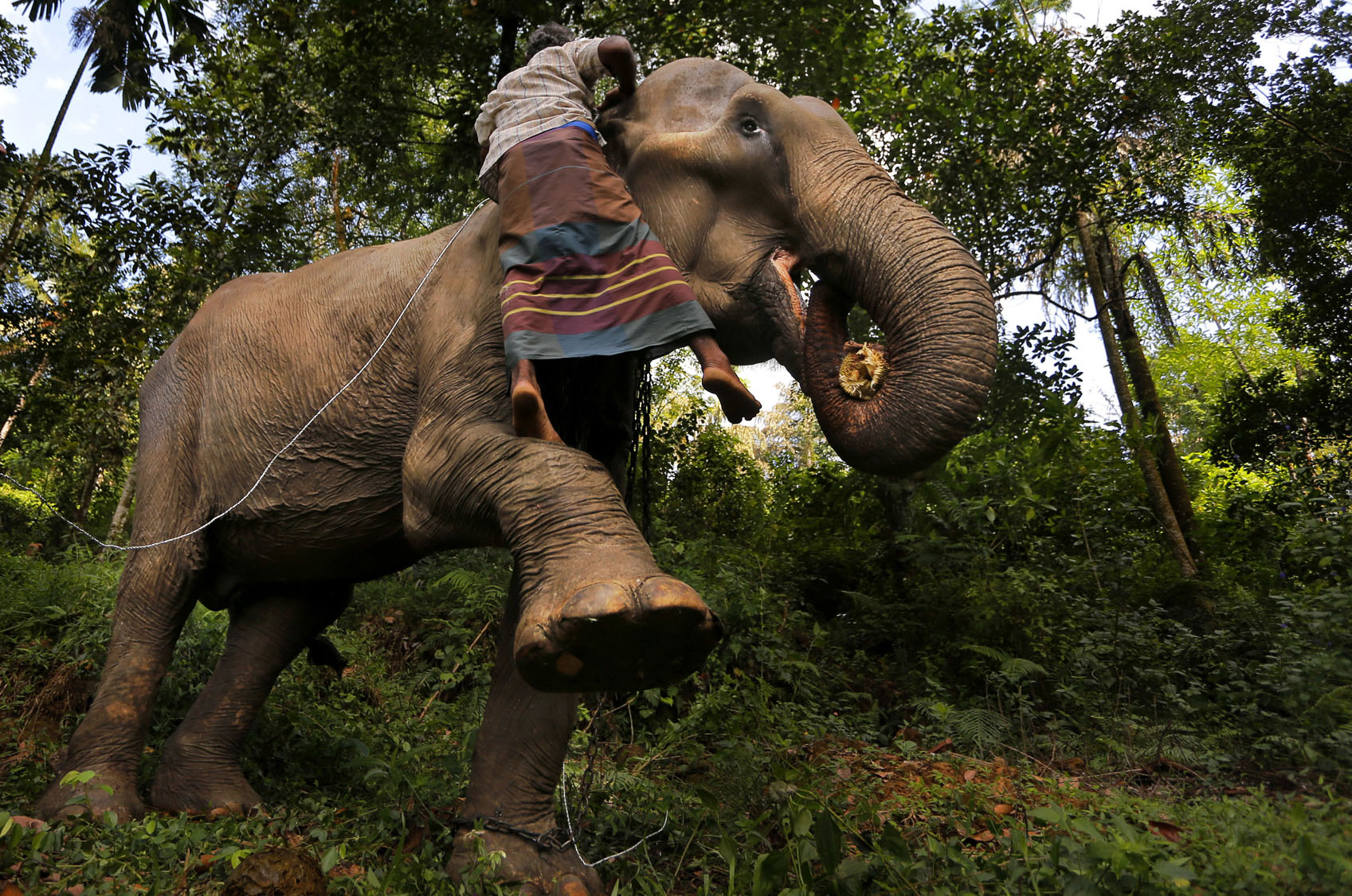 Sri Lanka cracks down on illegal elephant ownership