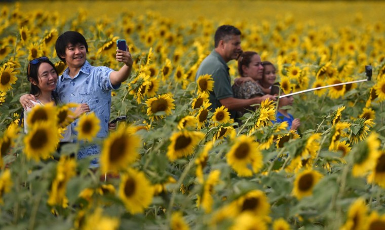 People pose for selfies in the sunflower field at Hess Road and Jarrettsville Pike Saturday afternoon. (Jerry Jackson/Baltimore Sun)