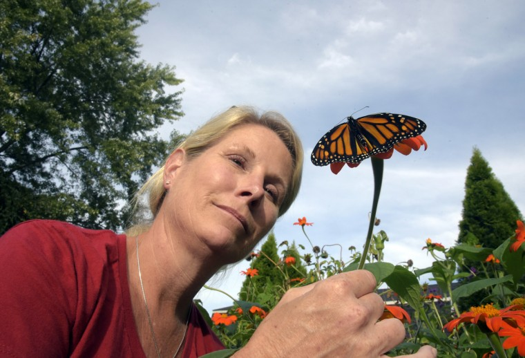 Pam Spencer, a nurse and a self-taught expert on monarch butterflies, is pictured in her back yard with a butterfly on a Mexican sunflower.  She keeps several containers of larvae/caterpillars grouped by their age/state of development. She tags them for a tagging program called Monarch Watch through the University of Kansas. Kyle Reedholm, 9, a former pediatric patient of hers, has been helping with butterflies for the past year. (Algerina Perna/Baltimore Sun)