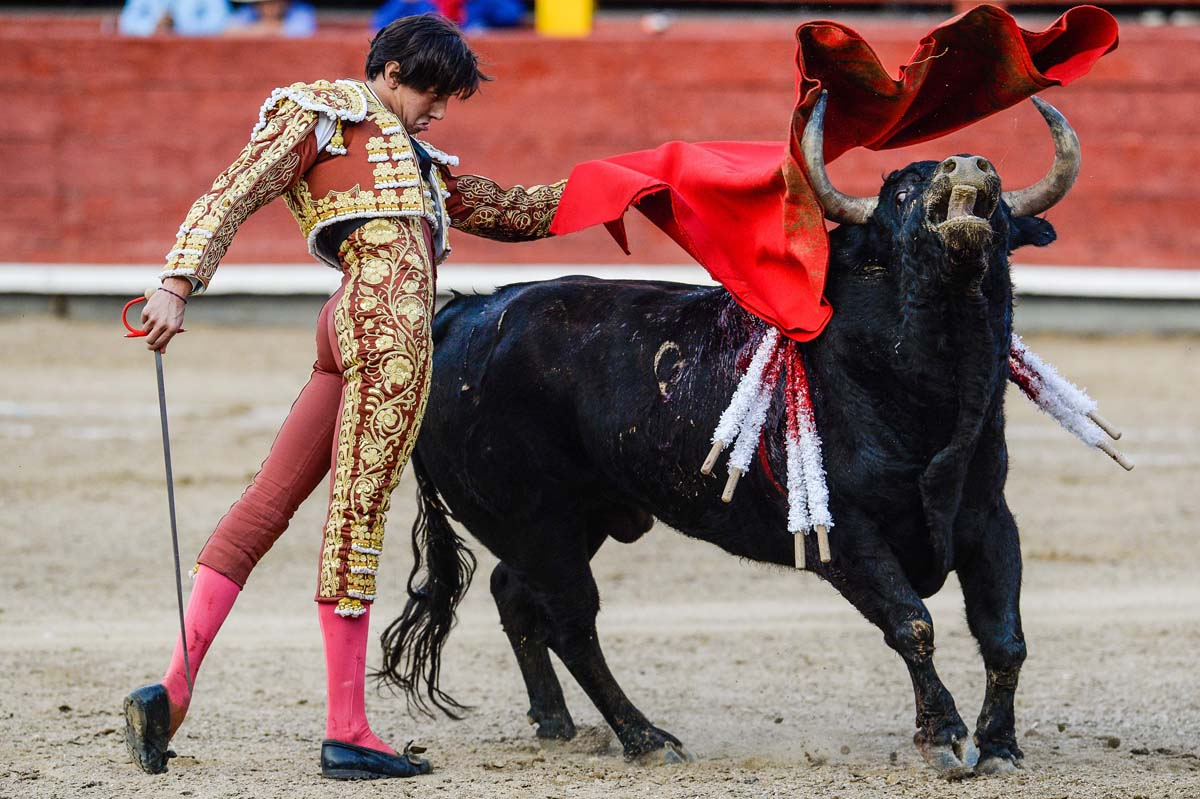 Image result for Bullfighting was brought to Peru