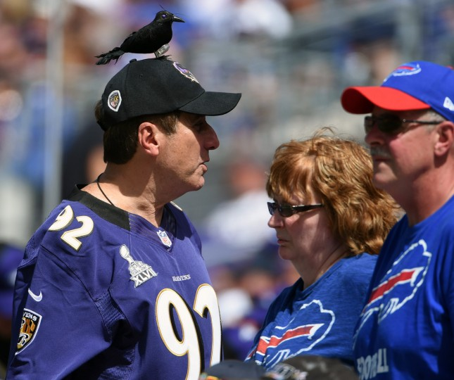 Baltimore, MD.--9/11/16-- Ravens and Bills fans are pictured during 2016 season opener at M & T Bank Stadium. (Kenneth K. Lam/Baltimore Sun)
