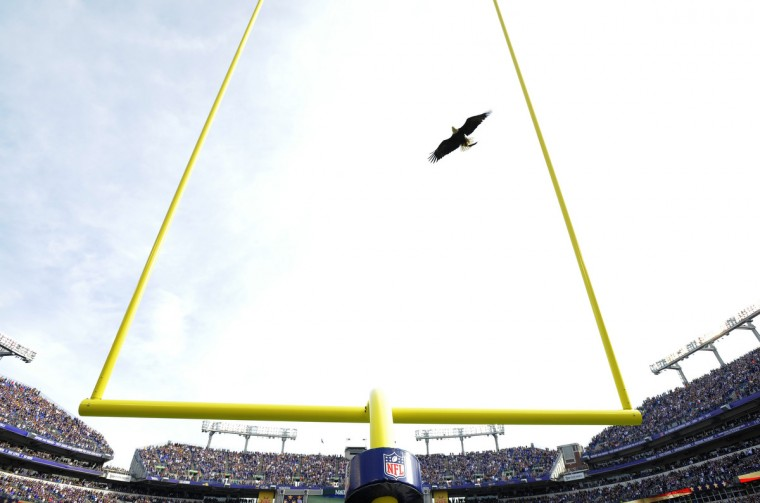 Baltimore, Maryland--11/6/16-- A bald eagle flies down to the field during pregame ceremonies before the Baltimore Ravens played the Pittsburgh Steelers at M&T Bank Stadium. (Lloyd Fox/Baltimore Sun)