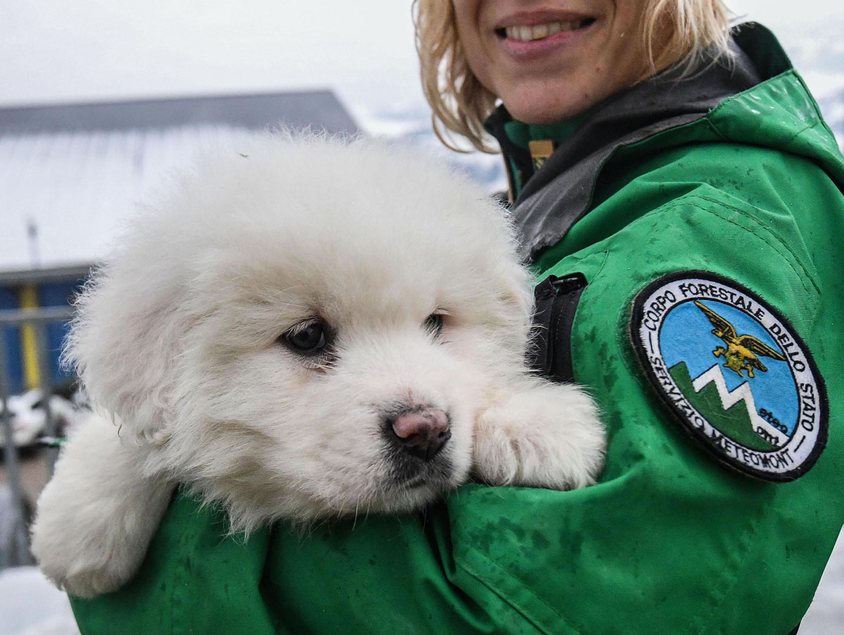 Puppies discovered after avalanche at hotel in Italy