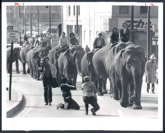 Elephants parade through the city in 1983. (Baltimore Sun)