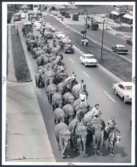 May 22, 1956 - Ringling Brothers: Barnum and Bailey Circus -- Elephants walking along Pulaski Highway. Photo taken by Baltimore Sun Staff Photographer by Ellis Malashuk.