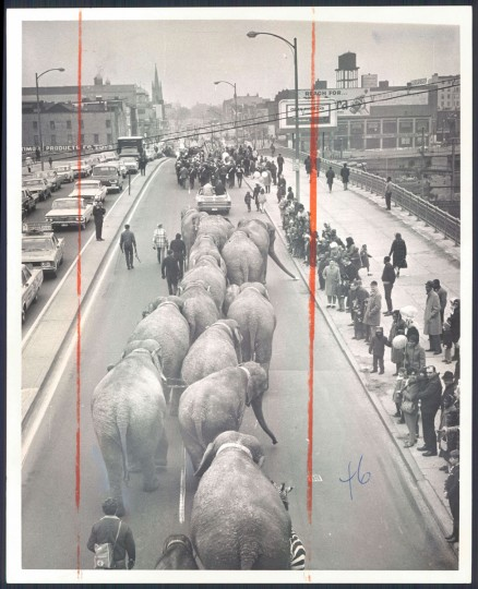 Ringling Brothers elephant parade in 1968. (Baltimore Sun)