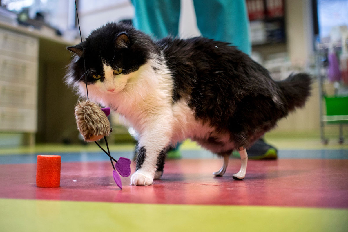 Cats get 'bionic' paws in Bulgaria