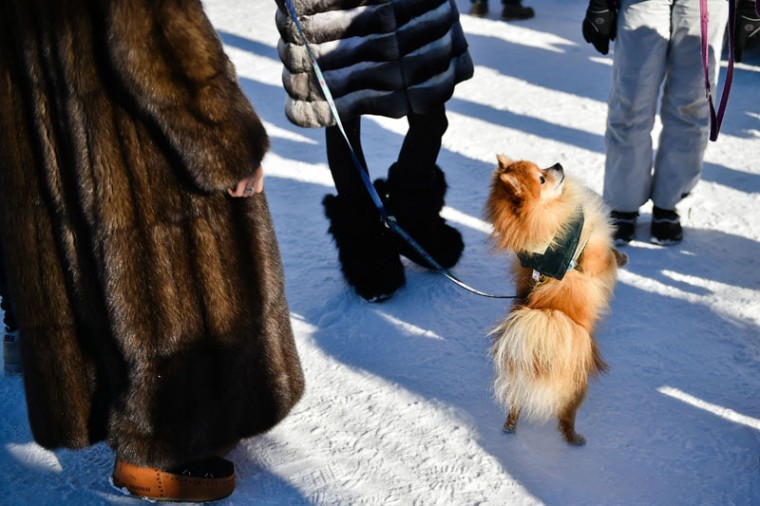 This picture taken on February 19, 2017, shows a dog at the White Turf horse racing event in St Moritz on February 19, 2017.(MICHAEL BUHOLZER/AFP/Getty Images)