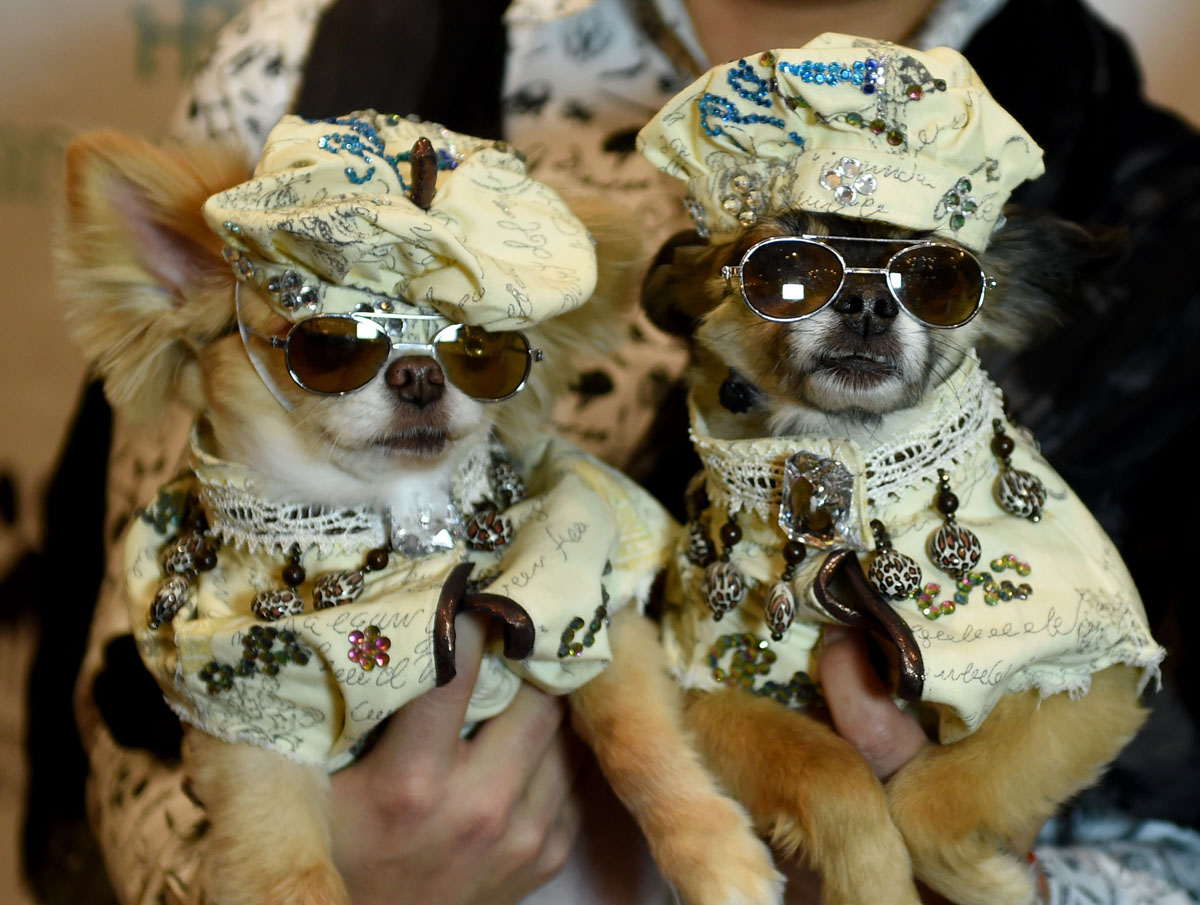 14th Annual New York Pet Fashion Show