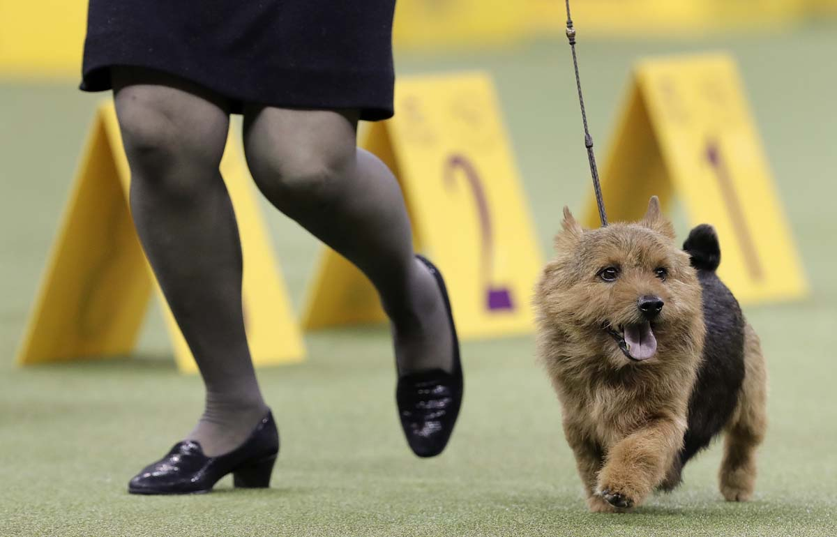show dogs - photo #46