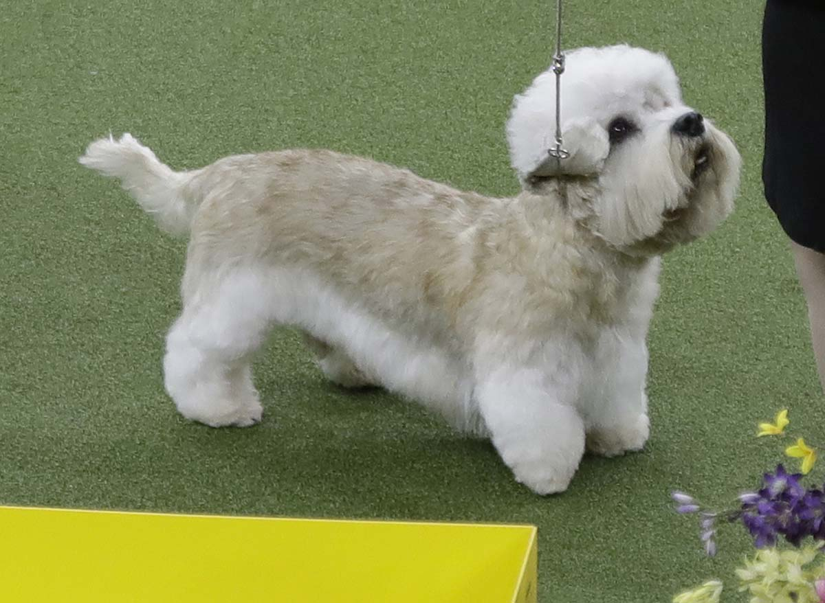 St Westminster Kennel Club Dog Show