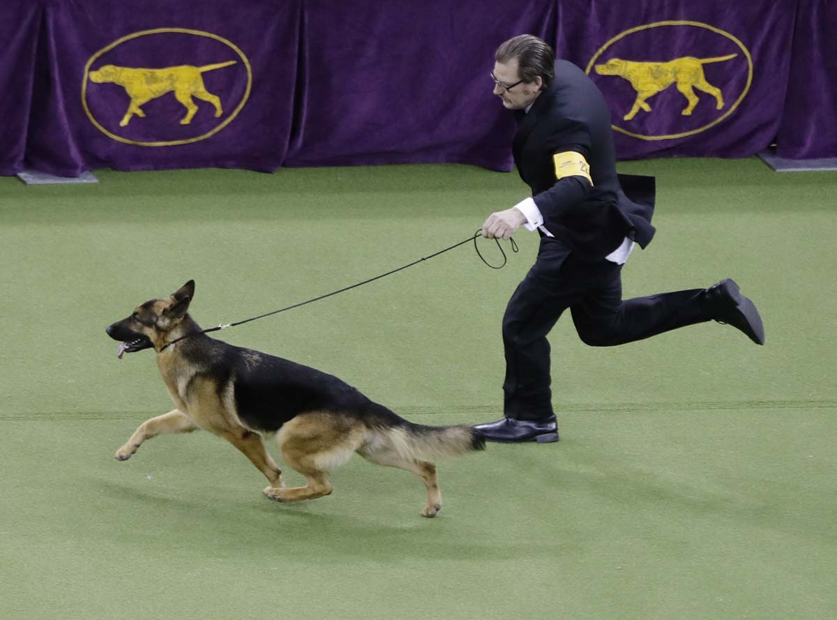 show dogs - photo #33