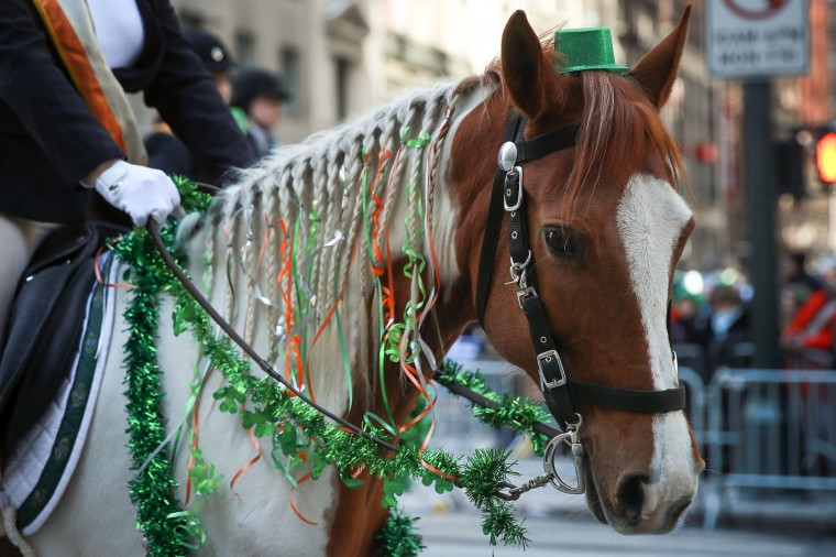 Members of the County Carlow Association ride horses as they march along 5th Avenue during the annual St. Patrick's Day parade, March 17, 2017 in New York City. The New York City St. Patrick's Day parade, dating back to 1762, is the world's largest St. Patrick's Day celebration. (Photo by Drew Angerer/Getty Images)