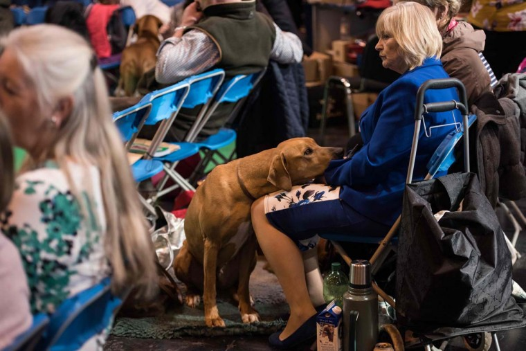 A dog rests on a woman's lap as she watches dogs being judged on the first day of the Crufts dog show at the National Exhibition Centre in Birmingham, central England, on March 9, 2017. (OLI SCARFF/AFP/Getty Images)