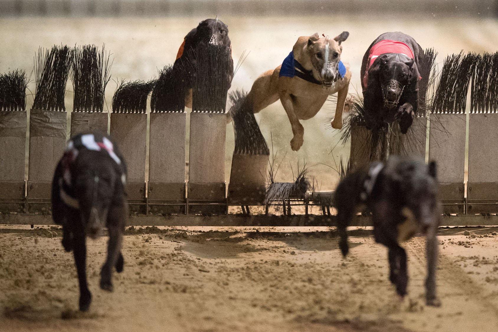greyhound racing classes