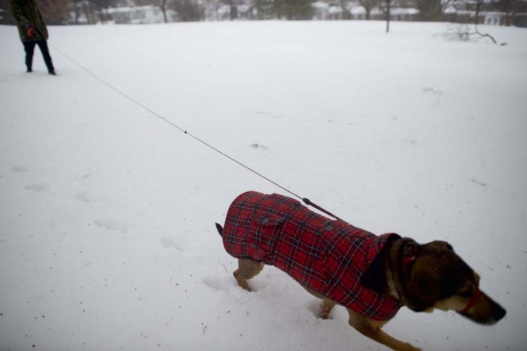 """Joel Gyimesi, 32, walks his dog """"Philly"""" through Gorgas Park in the snow March 14, 2017 in Philadelphia, Pennsylvania. Much of the Northeast is under a state of emergency as a blizzard is expected to bring over one foot of snow and high winds to the area. (Photo by Mark Makela/Getty Images)"""