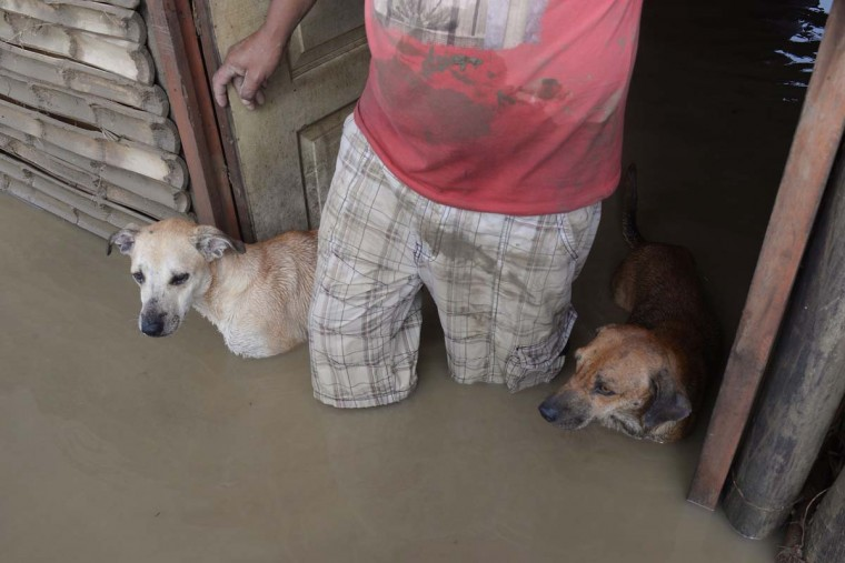 A local resident and his dogs stand in the doorway of their flooded home in Piura, northern Peru on March 28, 2017. (MIGUEL ARREATEGUI,STR/AFP/Getty Images)