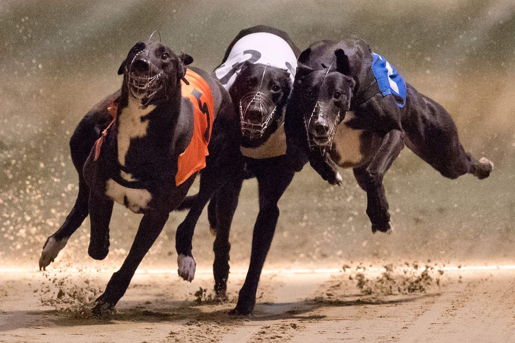The end of greyhound racing in London