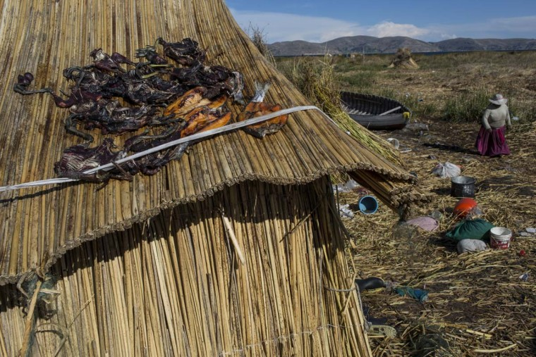 In this Feb. 4, 2017 photo, trapped birds and caught trout lay out to dry on the thatched roof of a home in Kapi Cruz Grande, a village on the shore of Lake Titicaca in the Puno region of Peru. A government-sponsored study conducted in 2014 found mercury, cadmium, zinc and copper in four types of fish that form part of local population's diet at levels higher than those advised for human consumption. (AP Photo/Rodrigo Abd)
