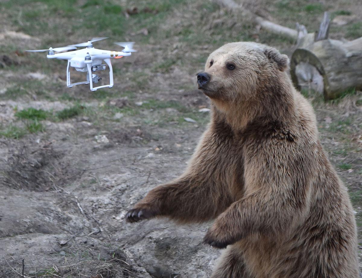 Brown bear rescue in Ukraine
