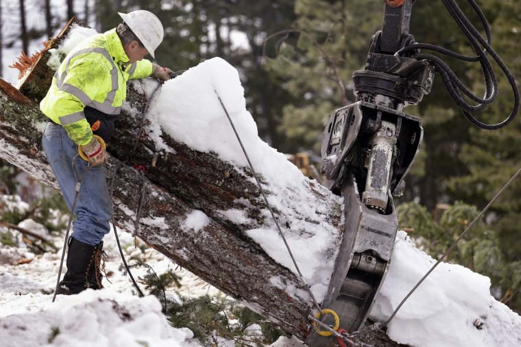 In this Feb. 22, 2017, photo, Rob Deter removes cables from trees hauled up a steep slope where a crew is thinning a 100-acre patch on private land owned by the Nature Conservancy overlooking Cle Elum Lake, in Cle Elum, Wash. As part of a broader plan by the nonprofit environmental group to restore the pine forests of the Central Cascades so they are more resilient to wildfires and climate change, they're cutting down trees to save the forest. (AP Photo/Elaine Thompson)