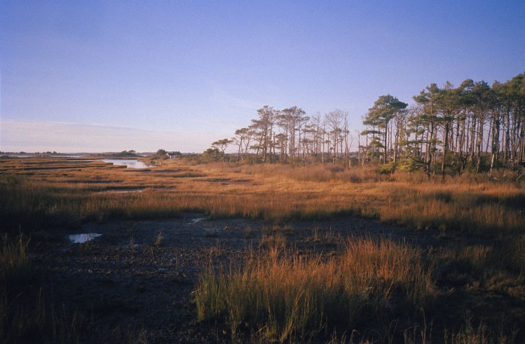 "MICA sophomore Landon Green often shoots photos of Assateague, where he used to go camping as a kid. ""I think it's one of the first landscapes that I saw that really captivated me,"" he said. (Photo courtesy Landon Green)"