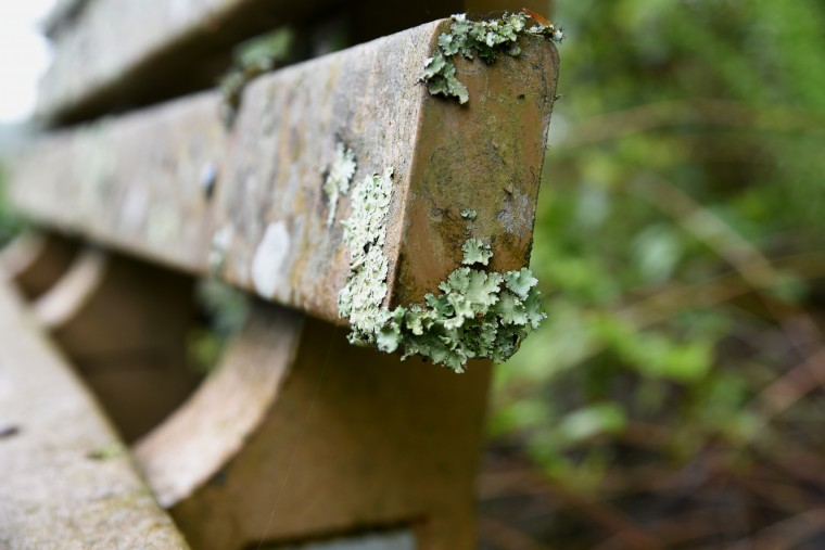 Lichen clings to a bench on the boardwalk in the Black Walnut Creek Nature Study Area  of Patuxent River Park. The bench is dedicated to the memory of James Kalp, a park and planning employee.  (Kim Hairston/Baltimore Sun)