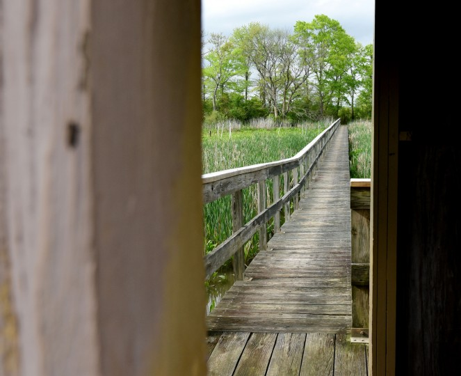 The boardwalk is seen from the observation blind off the Railroad Bed Trail in the Jug Bay Wetlands Sanctuary. (Kim Hairston/Baltimore Sun)