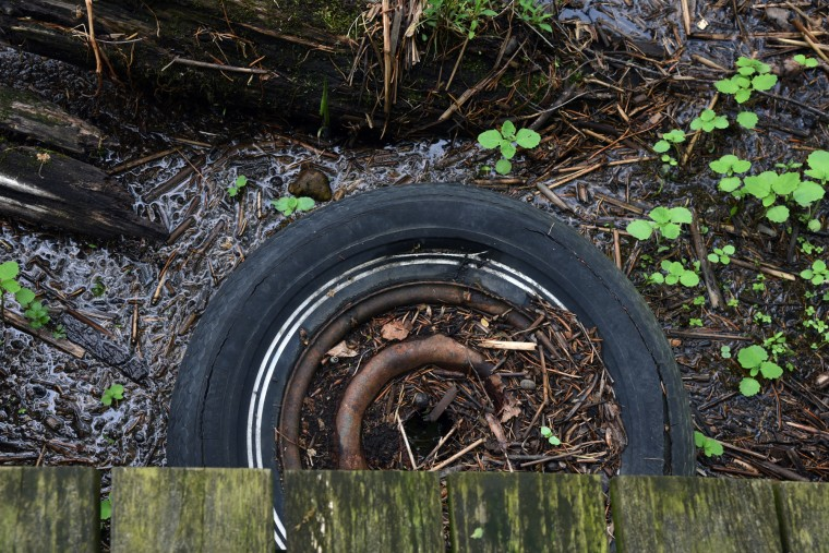 An old tire that floated down the Patuxent River lies near the Marsh Boardwalk Trail in the Jug Bay  Wetlands Sanctuary.  (Kim Hairston/Baltimore Sun)
