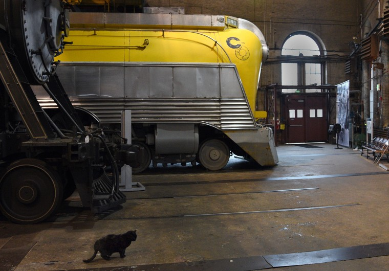 Mama, left, a formerly stray cat, wandered into the rail yard at the B&O Railroad Museum around 12 years ago.  She has made a home with the trains ever since.   (Barbara Haddock Taylor/Baltimore Sun)