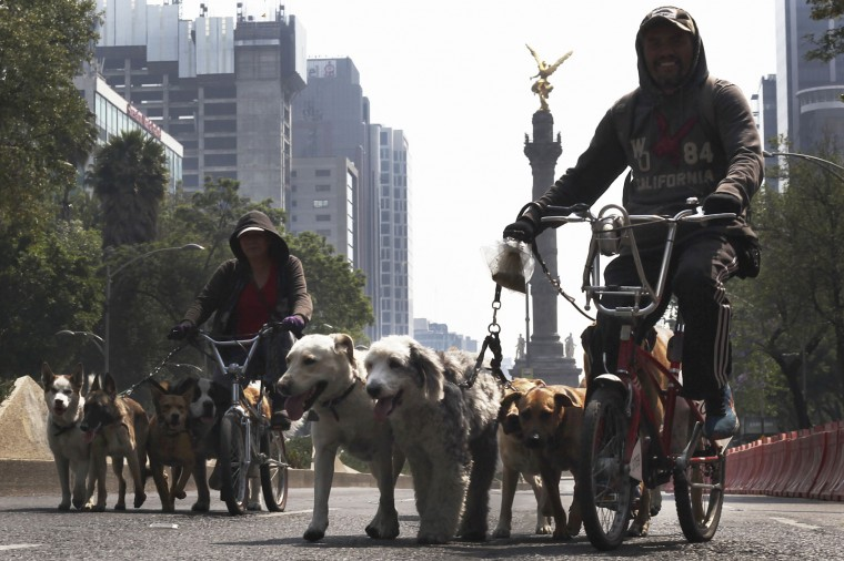 Professional dog walkers use a main street that was left free of cars by the Labor Day march in Mexico City, Monday, May 1, 2017. (AP Photo/Marco Ugarte)