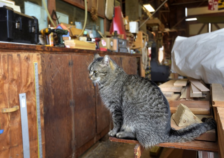 """Edna"" the cat, named after the Edna  E. Lockwood, an oyster dredge, sits on a workbench in the Chesapeake Bay Maritime Museum's working boatyard. The dredge, which operated from 1889-1967, is being restored by the museum.   (Algerina Perna/Baltimore Sun)"