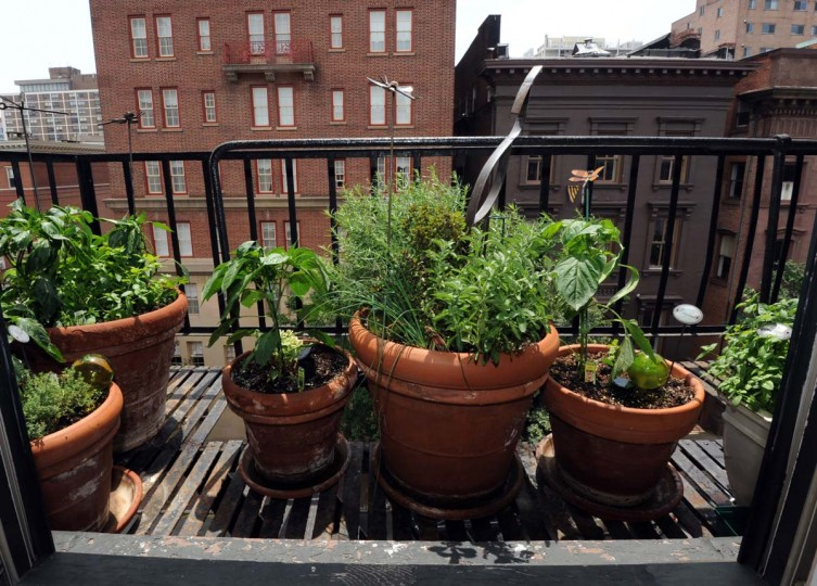 This is Steve Kelly's urban garden on his fire escape, where he grows veggies and herbs in pots in Mount Vernon. (Algerina Perna/Baltimore Sun)
