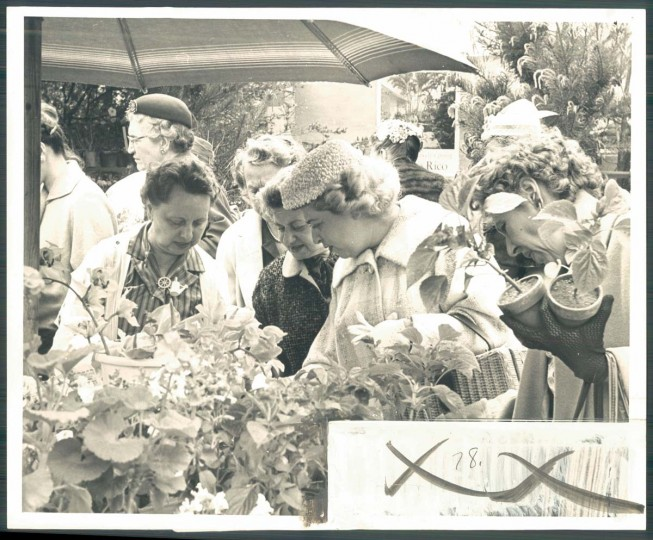 Shoppers bargained at the Flower Mart on Mount Vernon Square on May 12, 1960. (Photo by Ralph Robinson)