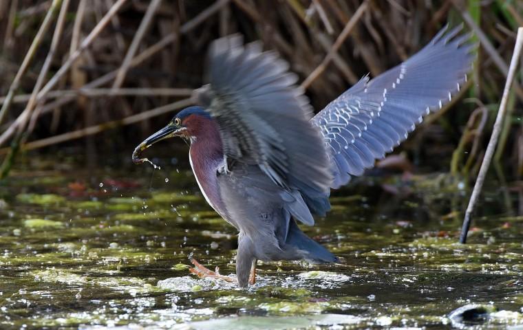 dk-baltimore-birds01