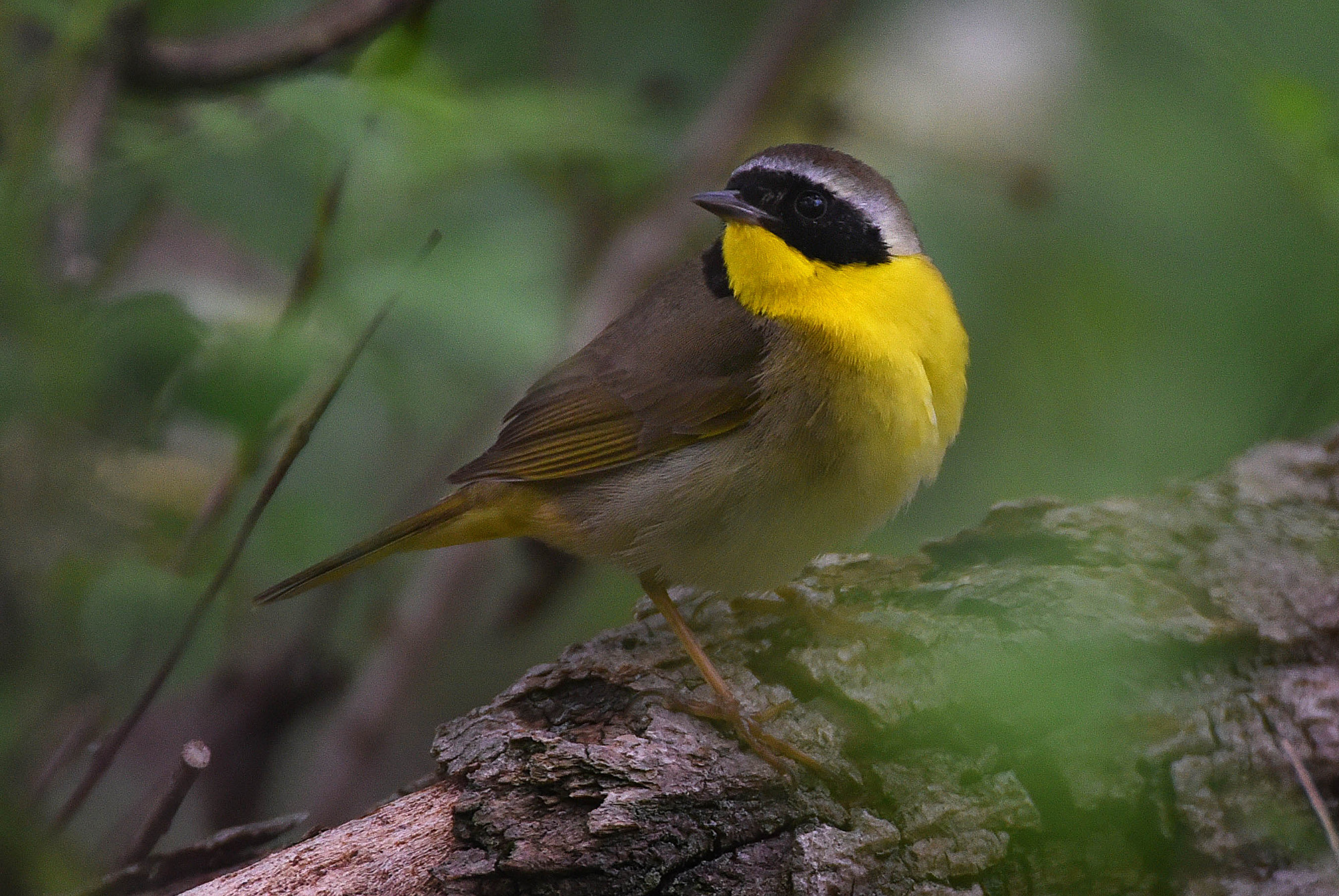 Spring birding in Baltimore